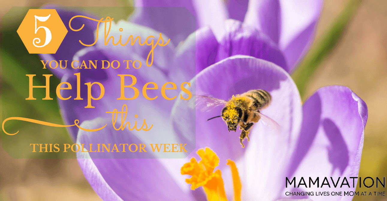 5 Things You Can Do to Help Bees this Pollinator Week