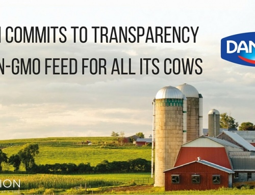 Dannon Commits to Transparency and Non-GMO Feed for All its Cows